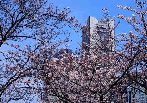 桜越しのランドマーク