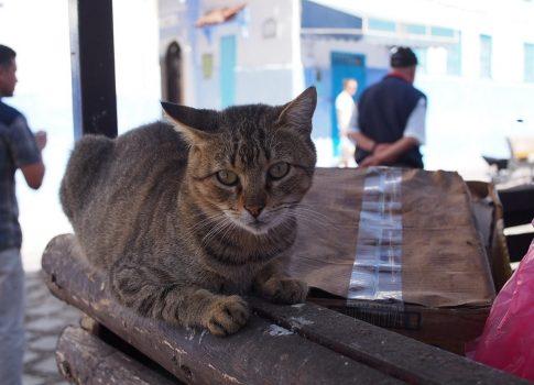 モロッコの猫たち