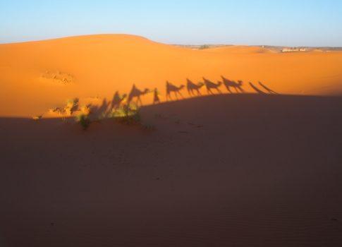 モロッコに行ってきた!その⑥ 〜ラクダに乗ってサハラで朝日編
