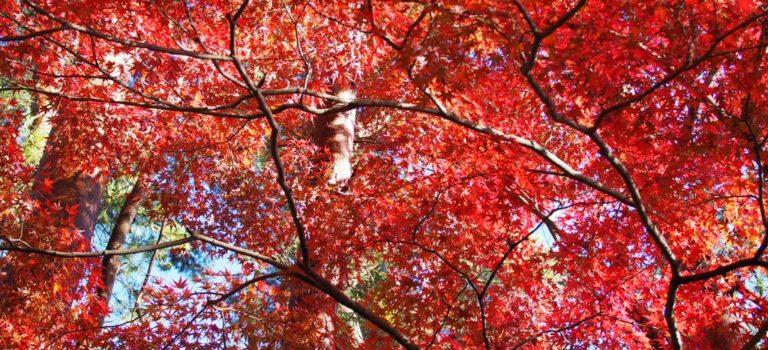 漁港のトンビと紅葉狩り、イルミネーションの日帰り静岡旅。