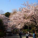 裏鎌倉お花見散歩。迷子になるのもまた楽し。