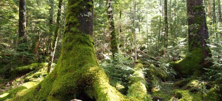 東山魁夷の「緑響く」の池と「もののけ姫」の森に行ってきた。