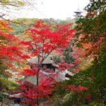 ちょっとチリチリ晩秋の三渓園