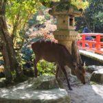 美しき世界遺産の厳島神社でスマホ祈願。