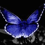 美しいけれども。けれども…?ドット・ハチソン「蝶のいた庭」
