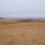 秋の鳥取旅行ちょっと島根〜その⑤因幡の白兎と鳥取砂丘