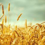 常識を疑え!「反穀物の人類史 〜国家誕生のディープヒストリー」